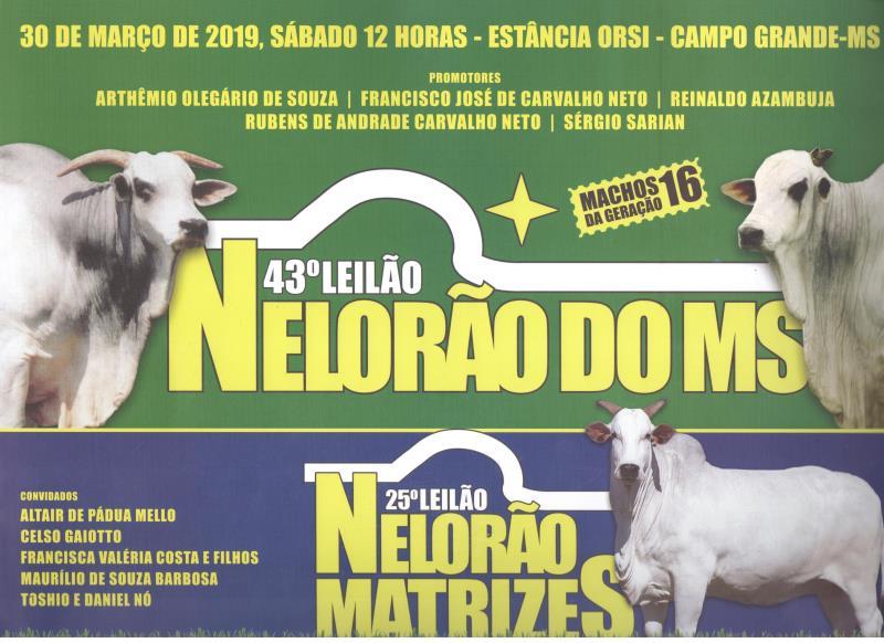 43° LEILÃO NELORÃO DO MS